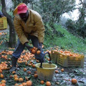 rosarno_lavoratori_immigrati